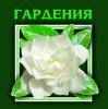 ГАРДЕНИЯ-2006 - ООД